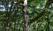 Trail Walk La Roche-en-Ardenne - Bérismenil - Circuit Natura 2000, des sites qui valent le détour - Lx19 - Photo 2