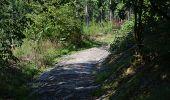 Trail Walk La Roche-en-Ardenne - Bérismenil - Circuit Natura 2000, des sites qui valent le détour - Lx19 - Photo 9