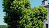 Trail Walk Assesse - Bois et vallons autour de Crupet - Photo 10