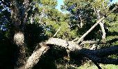 Trail Walk LA LONDE-LES-MAURES - Argentiere à Brégançon - Photo 29