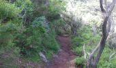 Randonnée Marche Unknown - Punta de  Hidalgo - Batan de Abajo - Photo 19