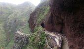 Randonnée Marche Unknown - Punta de  Hidalgo - Batan de Abajo - Photo 16