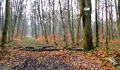Trail Walk LONGPONT - en foret de Retz_32_Longpont_Vertes Feuilles_AR - Photo 144