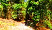 Trail Walk LONGPONT - en foret de Retz_32_Longpont_Vertes Feuilles_AR - Photo 162