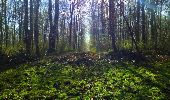 Trail Walk LONGPONT - en foret de Retz_32_Longpont_Vertes Feuilles_AR - Photo 63