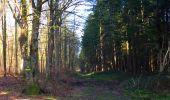 Trail Walk LONGPONT - en foret de Retz_32_Longpont_Vertes Feuilles_AR - Photo 48