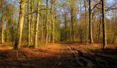 Trail Walk LONGPONT - en foret de Retz_32_Longpont_Vertes Feuilles_AR - Photo 11