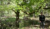 Trail Walk FONTAINEBLEAU - 3pi-150428 - DésertApremont-Jupiter - Photo 21