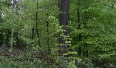 Trail Walk FONTAINEBLEAU - 3pi-150428 - DésertApremont-Jupiter - Photo 14