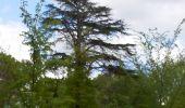 Trail Walk FONTAINEBLEAU - 3pi-150428 - DésertApremont-Jupiter - Photo 18