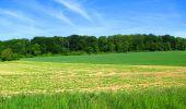 Randonnée Marche LONGPONT - en foret de Retz_33_Longpont_Vouty_Faverolles_AR - Photo 56