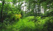 Randonnée Marche LONGPONT - en foret de Retz_33_Longpont_Vouty_Faverolles_AR - Photo 98