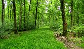 Randonnée Marche LONGPONT - en foret de Retz_33_Longpont_Vouty_Faverolles_AR - Photo 162