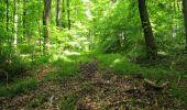 Randonnée Marche LONGPONT - en foret de Retz_33_Longpont_Vouty_Faverolles_AR - Photo 89