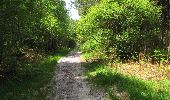 Randonnée Marche LONGPONT - en foret de Retz_33_Longpont_Vouty_Faverolles_AR - Photo 124