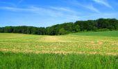 Randonnée Marche LONGPONT - en foret de Retz_33_Longpont_Vouty_Faverolles_AR - Photo 55