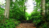Randonnée Marche LONGPONT - en foret de Retz_33_Longpont_Vouty_Faverolles_AR - Photo 139