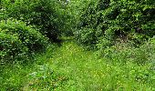 Randonnée Marche LONGPONT - en foret de Retz_33_Longpont_Vouty_Faverolles_AR - Photo 102