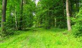Randonnée Marche LONGPONT - en foret de Retz_33_Longpont_Vouty_Faverolles_AR - Photo 105