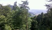 Trail Walk OTTROTT - Obernai-150625 - SteOdile-MurPaien - Photo 14