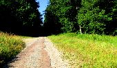 Randonnée Marche LONGPONT - en forêt de Retz_36_Longpont_Mareuil sur Ourcq_A - Photo 79