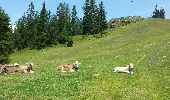 Randonnée Marche Unknown - Seefelder Spitze - Photo 15