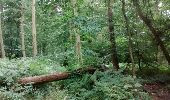 Randonnée Marche Unknown - poteau hêtre des princes 2 - Photo 10