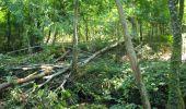 Randonnée Marche LONGPONT - en forêt de Retz_39_Longpont_Villers-Cotterets_AR - Photo 246