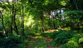 Randonnée Marche LONGPONT - en forêt de Retz_39_Longpont_Villers-Cotterets_AR - Photo 7