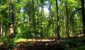 Randonnée Marche LONGPONT - en forêt de Retz_39_Longpont_Villers-Cotterets_AR - Photo 148