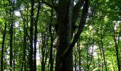 Randonnée Marche LONGPONT - en forêt de Retz_39_Longpont_Villers-Cotterets_AR - Photo 57