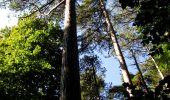 Randonnée Marche LONGPONT - en forêt de Retz_39_Longpont_Villers-Cotterets_AR - Photo 95