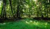 Randonnée Marche LONGPONT - en forêt de Retz_39_Longpont_Villers-Cotterets_AR - Photo 145
