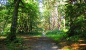 Randonnée Marche LONGPONT - en forêt de Retz_39_Longpont_Villers-Cotterets_AR - Photo 225