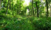 Randonnée Marche LONGPONT - en forêt de Retz_39_Longpont_Villers-Cotterets_AR - Photo 47