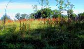 Randonnée Marche LONGPONT - en forêt de Retz_39_Longpont_Villers-Cotterets_AR - Photo 16