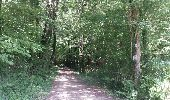 Trail Walk BIGNAY - Bignay (17) - Photo 6