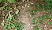 Trail Walk Houffalize - La Roche Plate - Photo 20