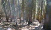 Trail Walk Houffalize - La Roche Plate - Photo 21