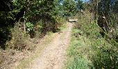 Trail Walk Houffalize - La Roche Plate - Photo 22