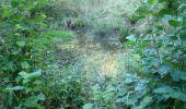Trail Walk Houffalize - La Roche Plate - Photo 32