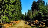 Trail Walk Houffalize - La Roche Plate - Photo 12