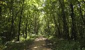Trail Walk Houffalize - Blancs Bois - Photo 34