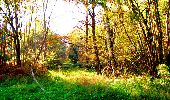 Randonnée Marche LONGPONT - en foret de Retz_ 41_Longpont_Vertes Feuilles_AR - Photo 37