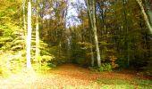 Randonnée Marche LONGPONT - en foret de Retz_ 41_Longpont_Vertes Feuilles_AR - Photo 10