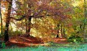 Randonnée Marche LONGPONT - en foret de Retz_ 41_Longpont_Vertes Feuilles_AR - Photo 172