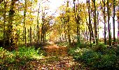 Randonnée Marche LONGPONT - en foret de Retz_ 41_Longpont_Vertes Feuilles_AR - Photo 81