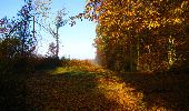 Randonnée Marche LONGPONT - en foret de Retz_ 41_Longpont_Vertes Feuilles_AR - Photo 247
