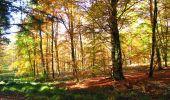 Randonnée Marche LONGPONT - en foret de Retz_ 41_Longpont_Vertes Feuilles_AR - Photo 86