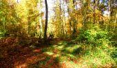 Randonnée Marche LONGPONT - en foret de Retz_ 41_Longpont_Vertes Feuilles_AR - Photo 95